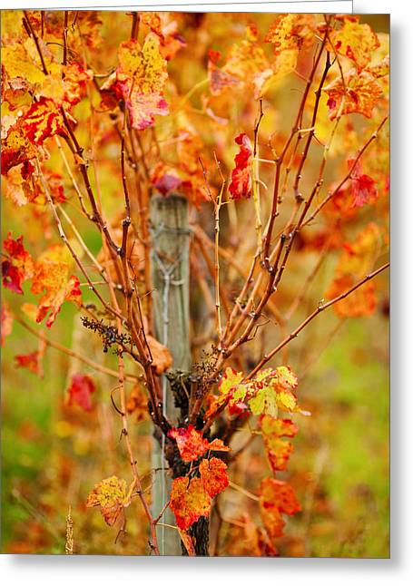 Close Focus Nature Scene Greeting Cards - Vineyard In Autumn, Gaillac, Tarn Greeting Card by Panoramic Images