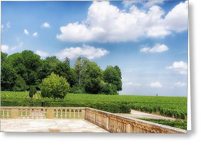 Burgundy Greeting Cards - Vineyard in Burgundy Greeting Card by Mountain Dreams