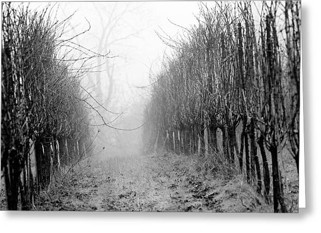 Vineyard Photographs Greeting Cards - Vineyard in Fog 1 Greeting Card by Rebecca Cozart