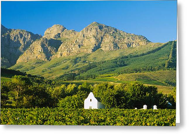 Vineyard Scene Greeting Cards - Vineyard In Front Of Mountains Greeting Card by Panoramic Images