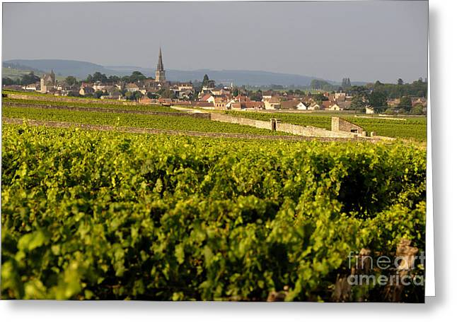 Vitis Greeting Cards - Vineyard in front of the village of Meursault. Burgundy Wine Road. Cote dOr.Burgundy. France. Europ Greeting Card by Bernard Jaubert