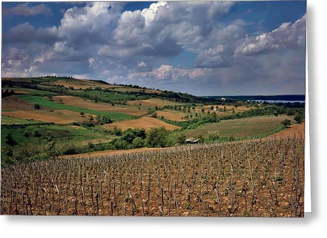Vineyard in Frushka Gora. Serbia Greeting Card by Juan Carlos Ferro Duque