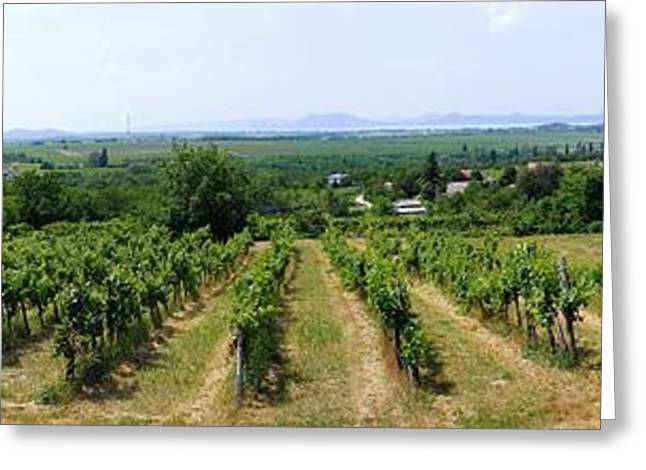Grape Vineyard Greeting Cards - Vineyard in Hungary Greeting Card by Mountain Dreams