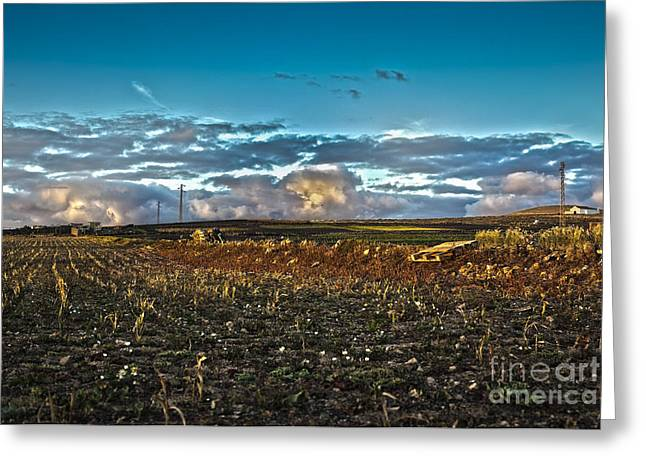 Vineyard In Lava Greeting Card by Patricia Hofmeester