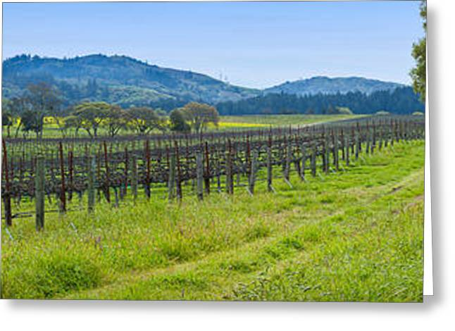 Sonoma County Vineyards. Greeting Cards - Vineyard In Sonoma Valley, California Greeting Card by Panoramic Images