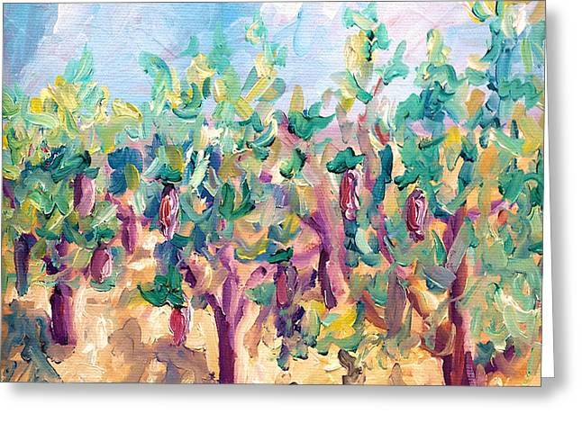 Vineyard Prints Greeting Cards - Vineyard in the afternoon sun Greeting Card by Todd Bandy