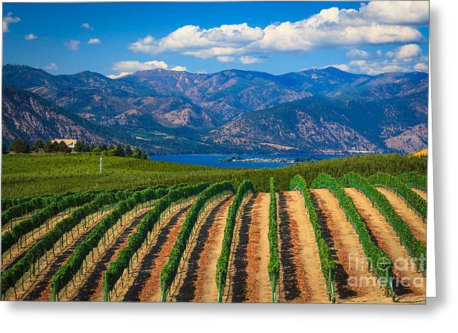 Winemaking Photographs Greeting Cards - Vineyard in the Mountains Greeting Card by Inge Johnsson