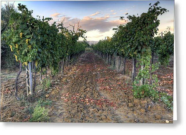 Fermentation Greeting Cards - Vineyard in Tuscany Greeting Card by Al Hurley