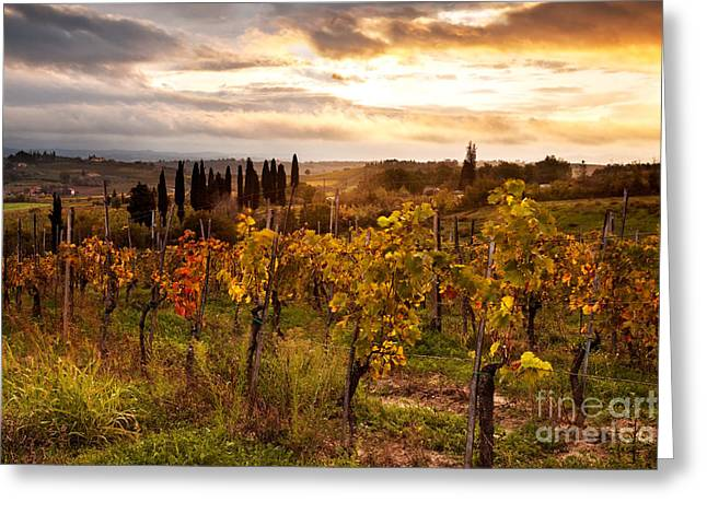 Vineyard Poster Greeting Cards - Vineyard in Tuscany Greeting Card by Matteo Colombo