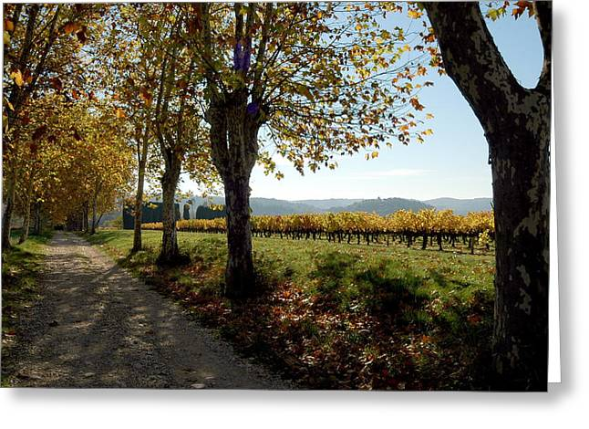 Chianti Digital Art Greeting Cards - Vineyard in Tuscany Greeting Card by Wayne Sloop