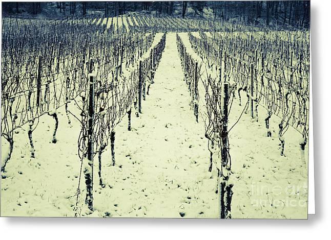 Sem Greeting Cards - Vineyard in winter 1 Greeting Card by Maria Bobrova