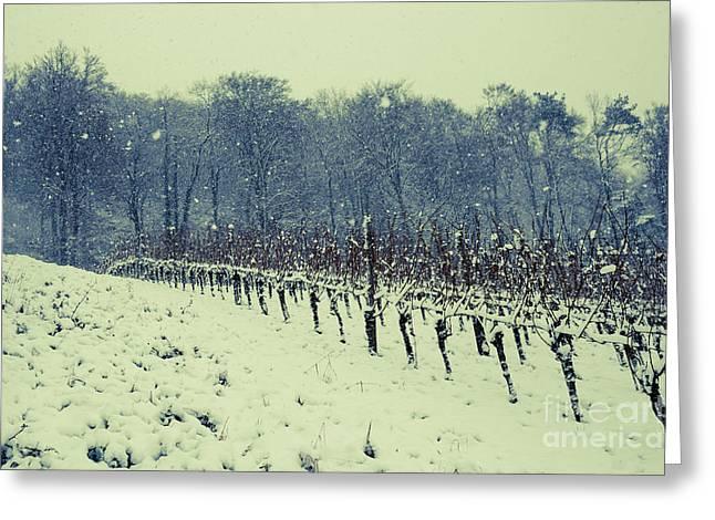 Sem Greeting Cards - Vineyard in winter 2 Greeting Card by Maria Bobrova