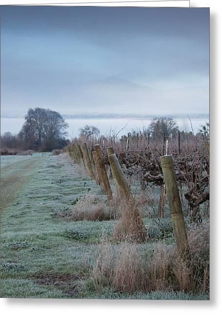 Vineyard Landscape Greeting Cards - Vineyard In Winter During Fog, Ukiah Greeting Card by Panoramic Images