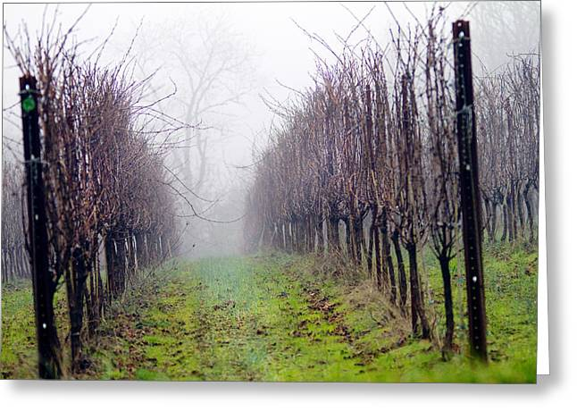 Grape Vineyard Greeting Cards - Vineyard in Winter Greeting Card by Rebecca Cozart