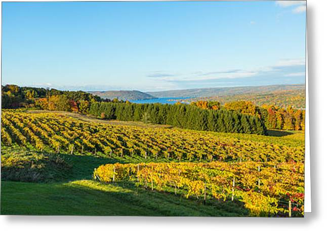 Winemaking Photographs Greeting Cards - Vineyard, Keuka Lake, Finger Lakes, New Greeting Card by Panoramic Images