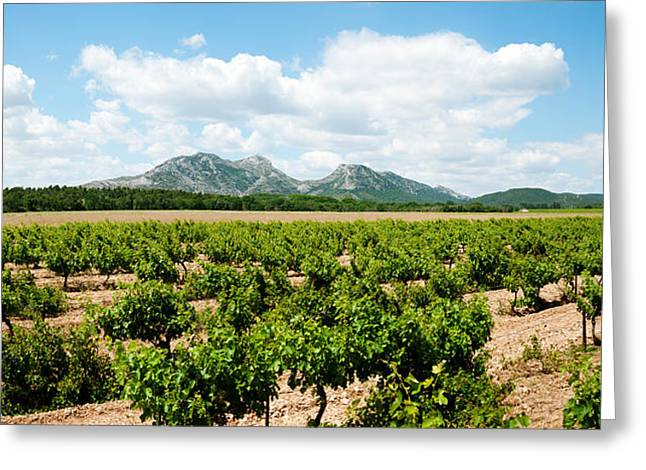 Winemaking Greeting Cards - Vineyard, Les Baux De Provence Greeting Card by Panoramic Images