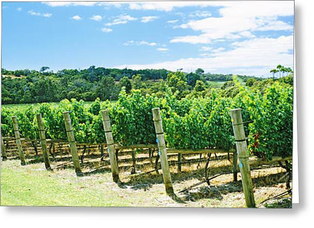 Winemaking Greeting Cards - Vineyard, Margaret River, Western Greeting Card by Panoramic Images