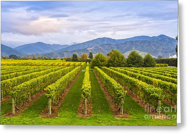 Vineyard Photographs Greeting Cards - Vineyard Marlborough New Zealand Greeting Card by Colin and Linda McKie