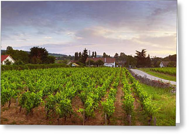 Winemaking Greeting Cards - Vineyard, Mercurey, France Greeting Card by Panoramic Images