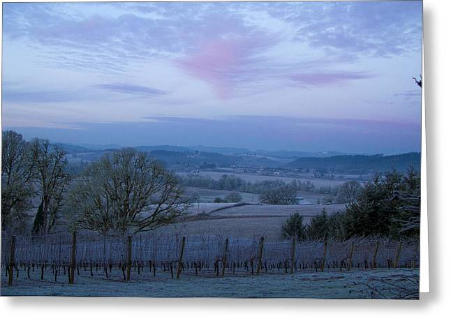 Vintner Photographs Greeting Cards - Vineyard morning light Greeting Card by Jean Noren