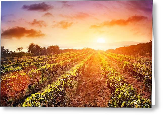 Vineyard Greeting Card by Mythja  Photography