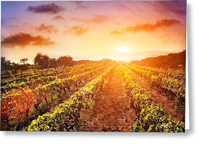 Vineyard Greeting Card by Mythja  Photography