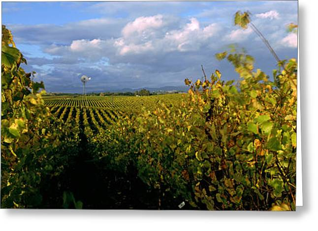 Vineyard Scene Greeting Cards - Vineyard, Napa Valley, California, Usa Greeting Card by Panoramic Images