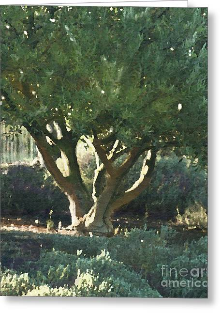 Grapevines Greeting Cards - Vineyard Olive Greeting Card by Artist and Photographer Laura Wrede