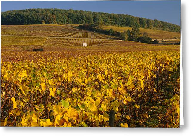 Vineyard On A Landscape, Bourgogne Greeting Card by Panoramic Images