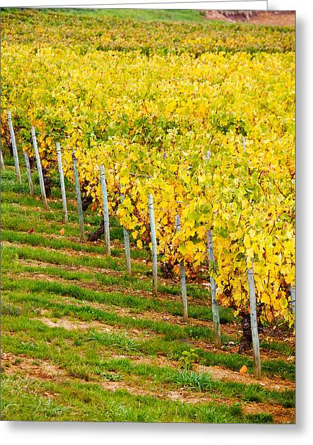 Burgundy Greeting Cards - Vineyard, Ozenay, Maconnais Greeting Card by Panoramic Images