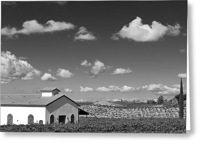 Big Sky Country Greeting Cards - Vineyard Greeting Card by Peter Tellone