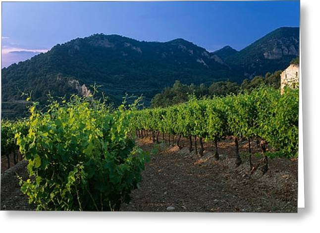 Winery Photography Greeting Cards - Vineyard, Provence-alpes-cote Dazur Greeting Card by Panoramic Images