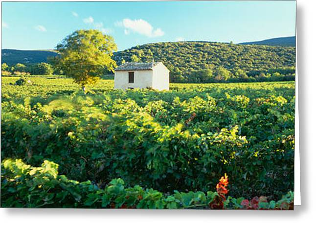 Vineyard Landscape Greeting Cards - Vineyard Provence France Greeting Card by Panoramic Images