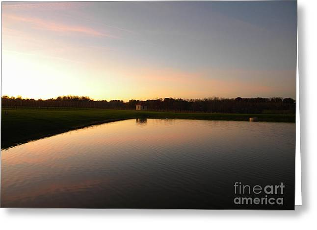 Childress Winery Greeting Cards - Vineyard Reflections Greeting Card by Jaclyn Hughes Fine Art