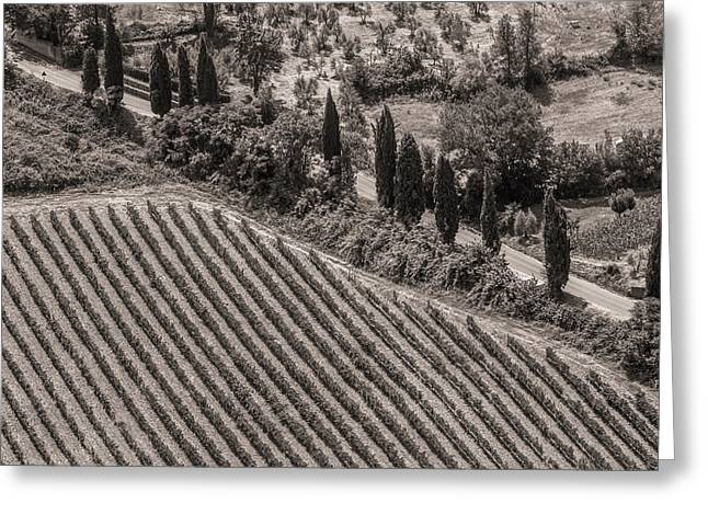 Vineyard Road Greeting Card by Clint Brewer