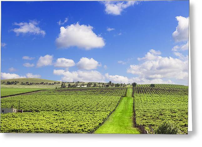 Verdant Greeting Cards - Vineyard South Australia Square Greeting Card by Colin and Linda McKie