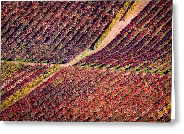 Orangem Tree Greeting Cards - Vineyard Greeting Card by Stefano Termanini