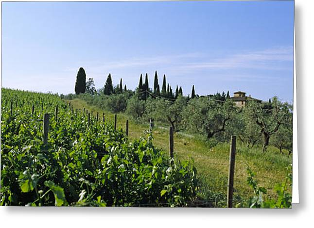 Viniculture Greeting Cards - Vineyard, Tuscany, Italy Greeting Card by Panoramic Images