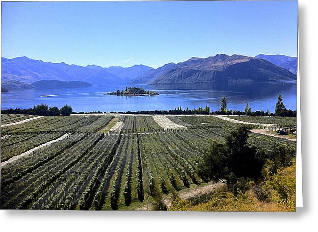 Faa Featured Greeting Cards - Vineyard View of Ruby Island Greeting Card by Venetia Featherstone-Witty