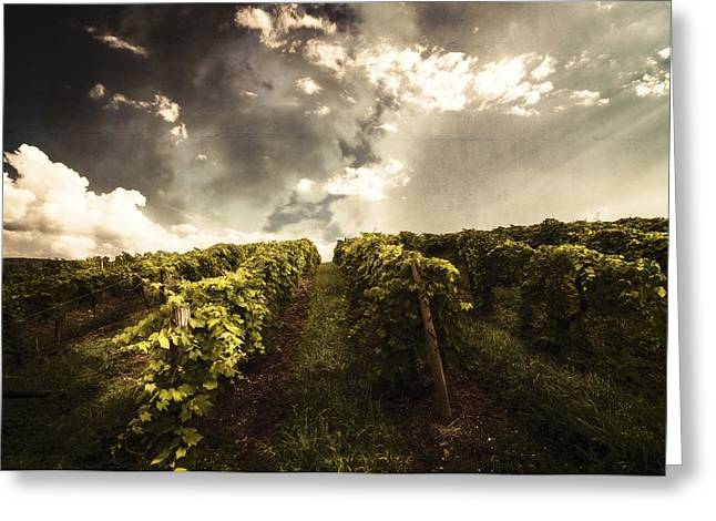 Keuka Greeting Cards - Vineyard Wanderlust Greeting Card by Stuart Gallagher