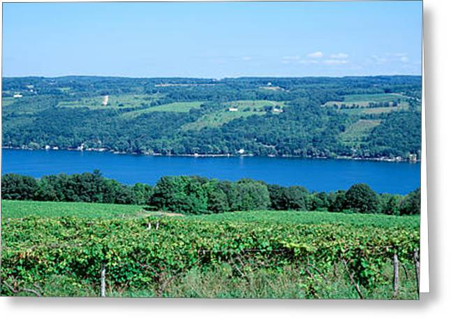 Vineyard With A Lake In The Background Greeting Card by Panoramic Images