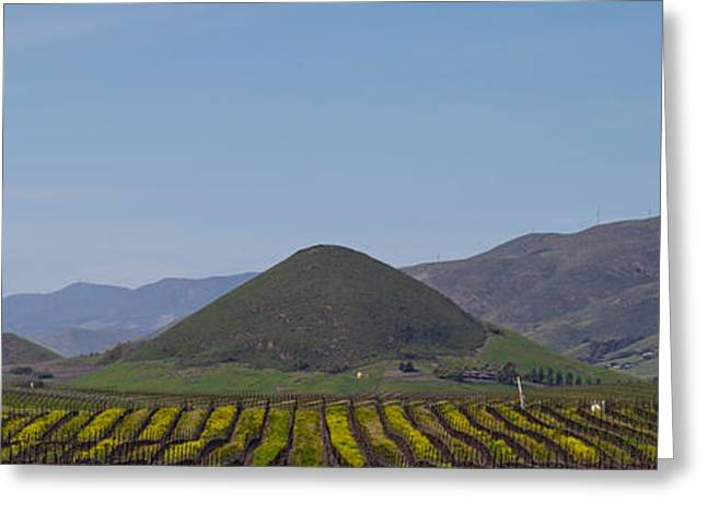 San Luis Obispo Greeting Cards - Vineyard With A Mountain Range Greeting Card by Panoramic Images