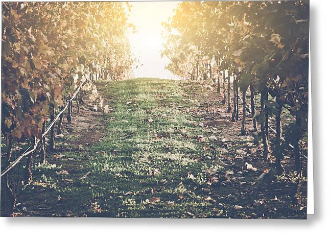 Grapevine Autumn Leaf Greeting Cards - Vineyard with Blue Sky in Autumn with Vintage Film Style Filter Greeting Card by Brandon Bourdages