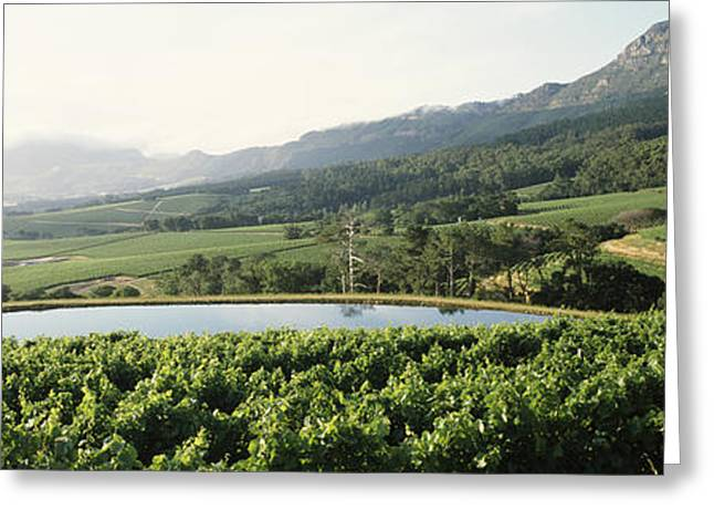 Cape Town Greeting Cards - Vineyard With Constantiaberg Mountain Greeting Card by Panoramic Images