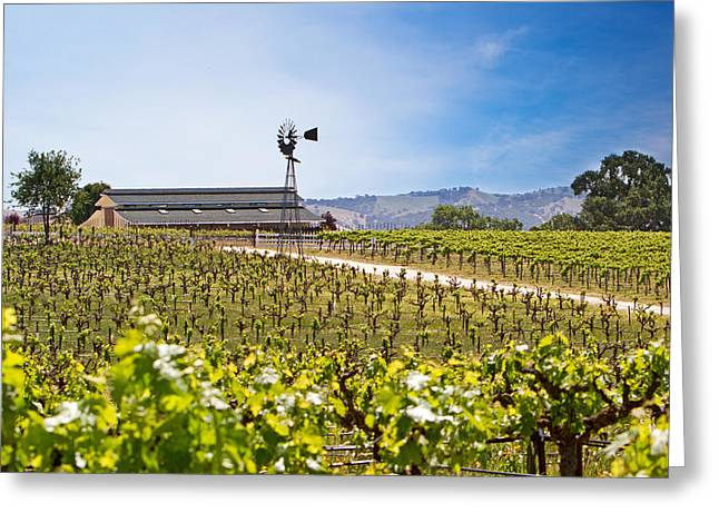 Vines Greeting Cards - Vineyard with young vines Greeting Card by Susan  Schmitz