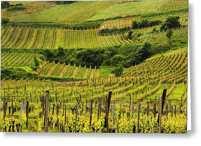 Wine Scene Greeting Cards - Vineyards Above Ammerschwihr France Greeting Card by Greg Matchick