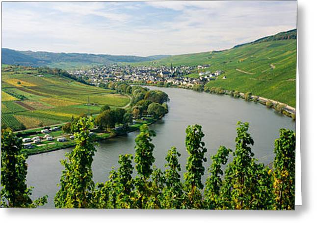 Vineyard Landscape Greeting Cards - Vineyards Along A River, Moselle River Greeting Card by Panoramic Images