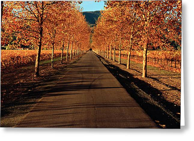 Vineyard Landscape Greeting Cards - Vineyards Along A Road, Beaulieu Greeting Card by Panoramic Images
