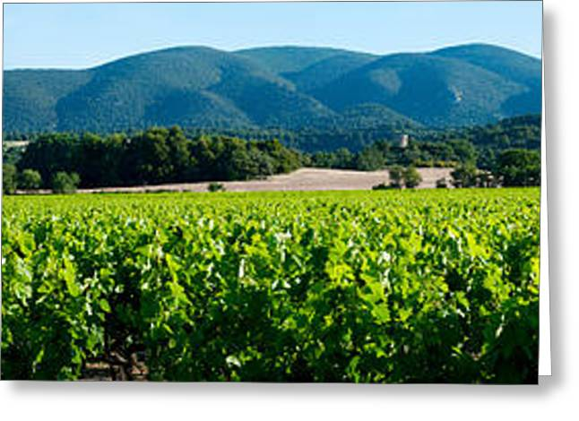Winemaking Greeting Cards - Vineyards Along D27, Vaugines Greeting Card by Panoramic Images