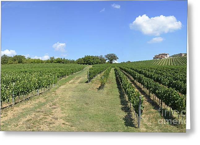 Vineyards And Hills In Chianti Greeting Card by Sami Sarkis